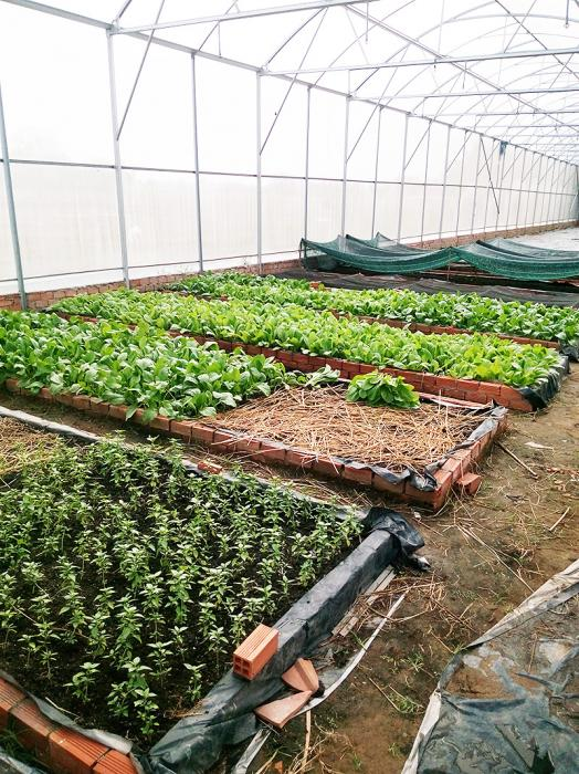 Nhà kính trồng rau hữu cơ