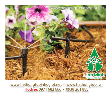 Khởi nghiệp thành với mô hình trồng dưa lưới kết hợp hệ thống nhỏ giọt Israel.