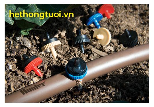 Tưới nhỏ giọt cho dưa trồng bịch tại Quảng Nam