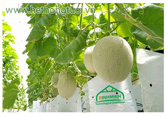 Bao đựng giá thể - Túi trồng dưa lưới