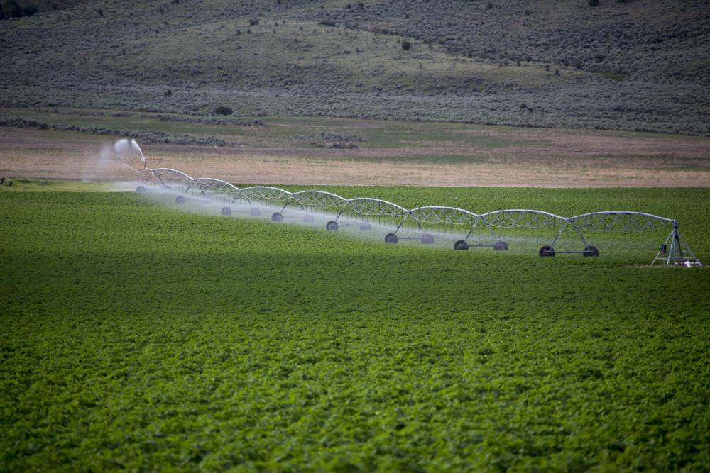 Kỹ thuật tưới phun mưa trong nông nghiệp công nghệ cao