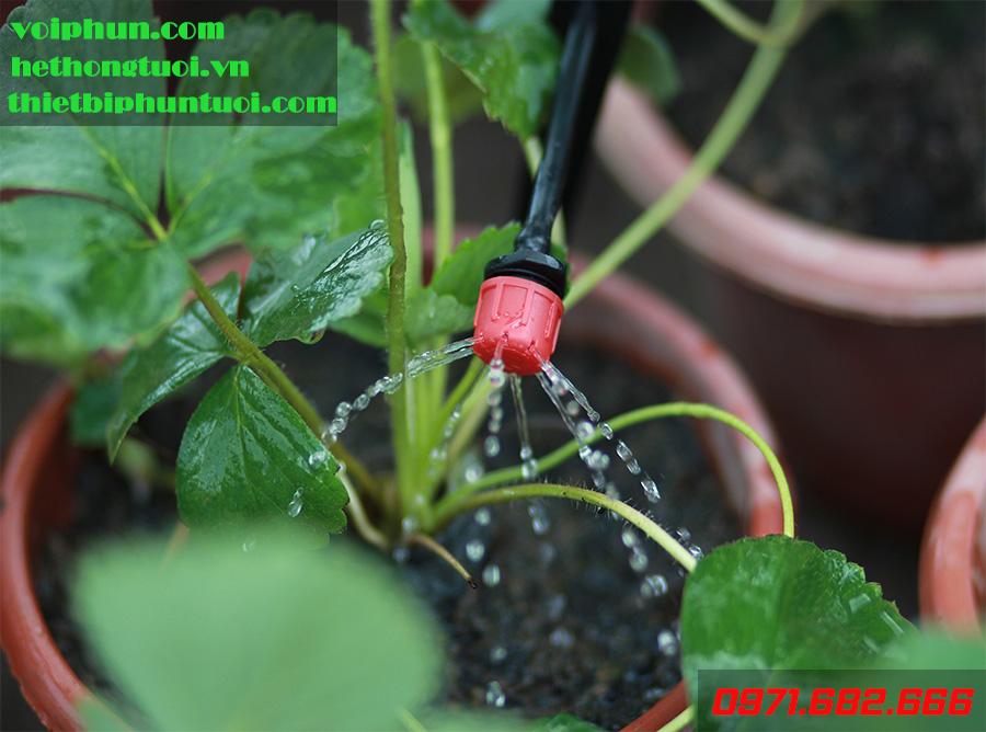 Sự khác nhau cơ bản giữa ống nhỏ giọt bù áp và không bù áp