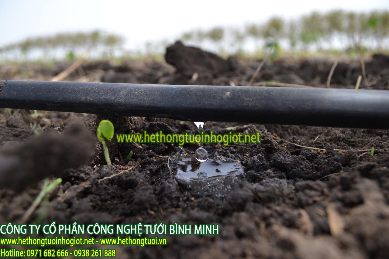 Chi phí đầu tư tưới nhỏ giọt dải luống 16mm cây trồng dưa leo